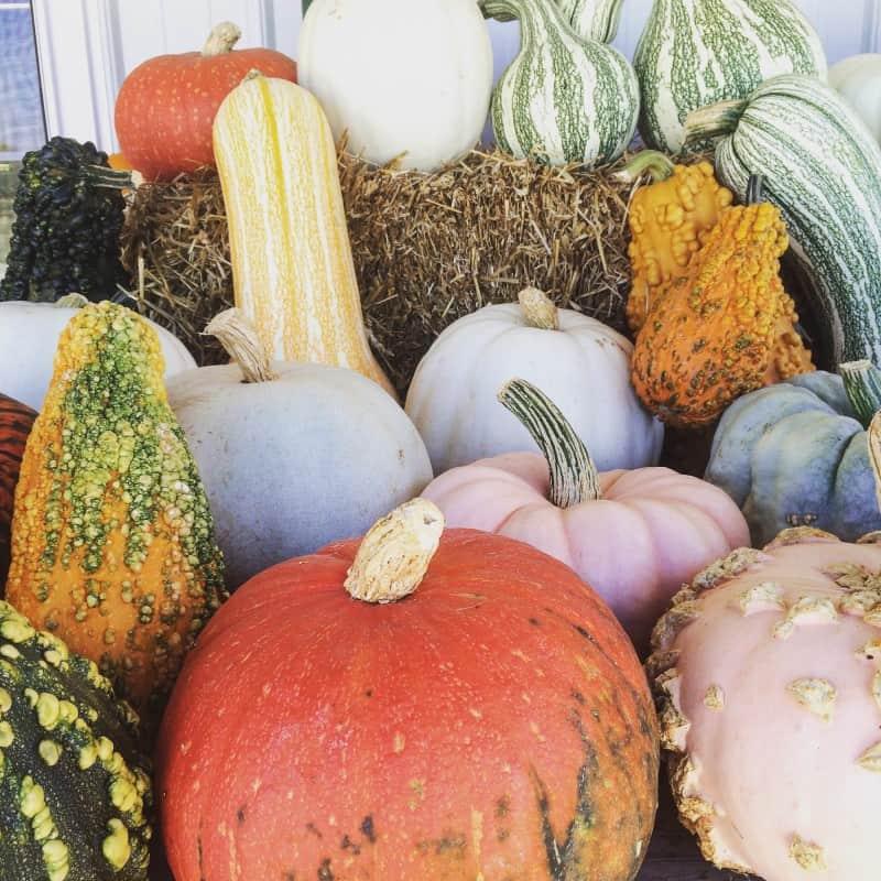 fall pumpkins and october goals