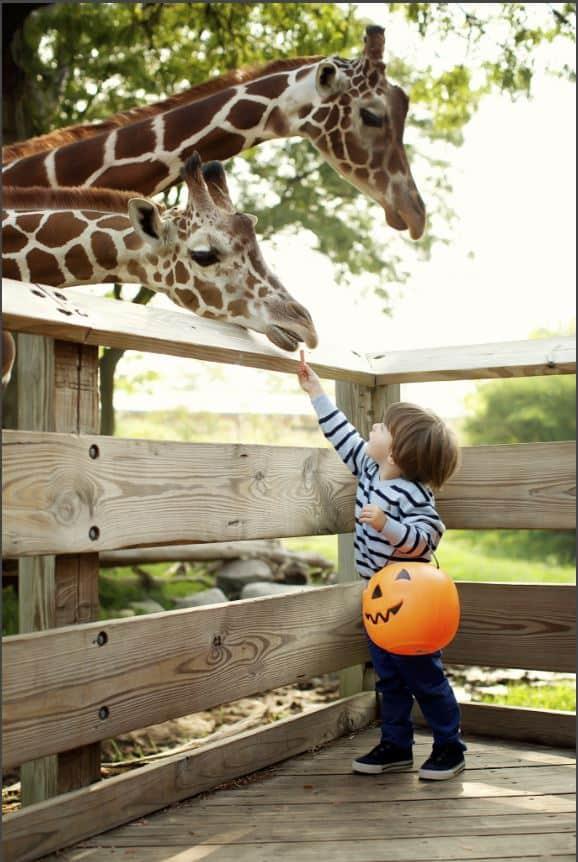 ZooBoo Indianapolis Zoo _ Indy's Child