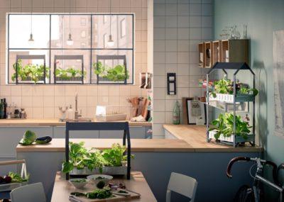 Indoor gardening for year round fresh spices!